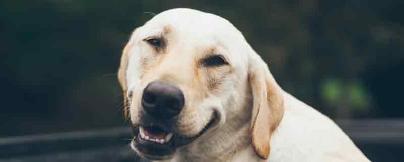 Hundefutter Direktvertrieb